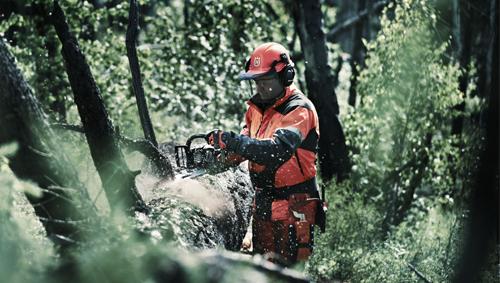 งานป่าไม้